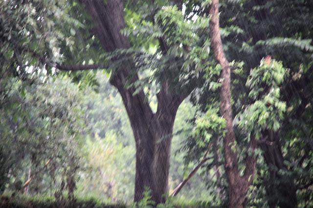 Rains in Solan HP