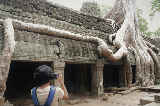 Tomb Raider Tree at Ta Prohm