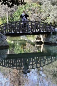 bridge wordless wednesday