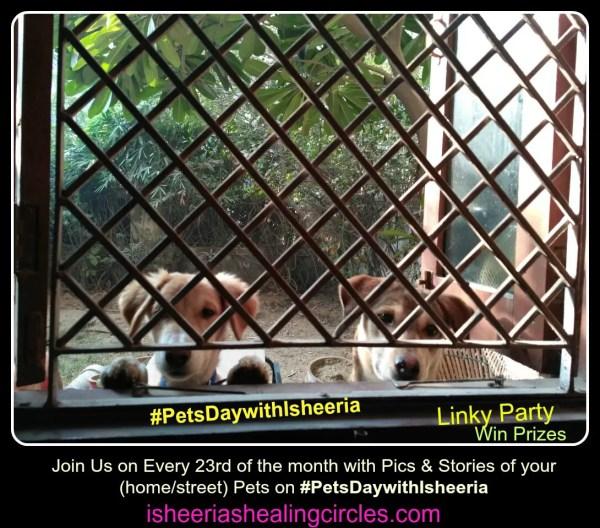 #PetsDaywithIsheeria