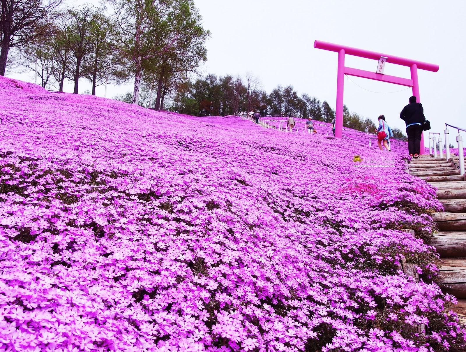 北海道 花 有名 - Homu Interia