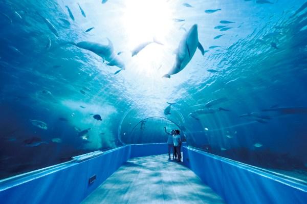 イルカたちの楽園1