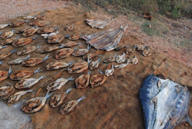 Fish drying by the roadside in Trincomalee