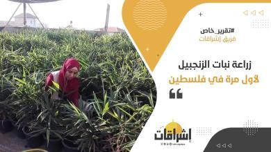 Photo of زراعة نبات الزنجبيل .. لأول مرة في فلسطين