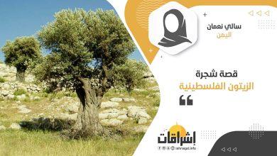 Photo of قصة شجرة الزيتون الفلسطينية