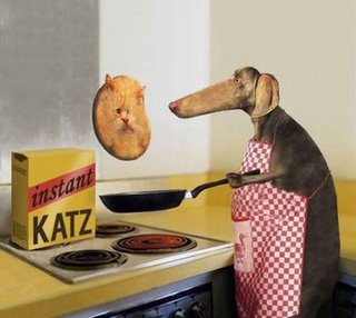 Funny cat pancake photo