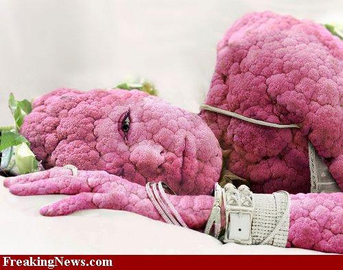 Mrs-Cauliflower---47865