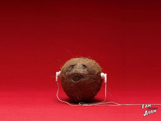 funny-coconut-wallpaper-2005225141