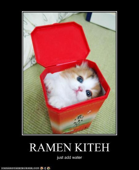 fb7c0_funny-pictures-cat-is-ramen