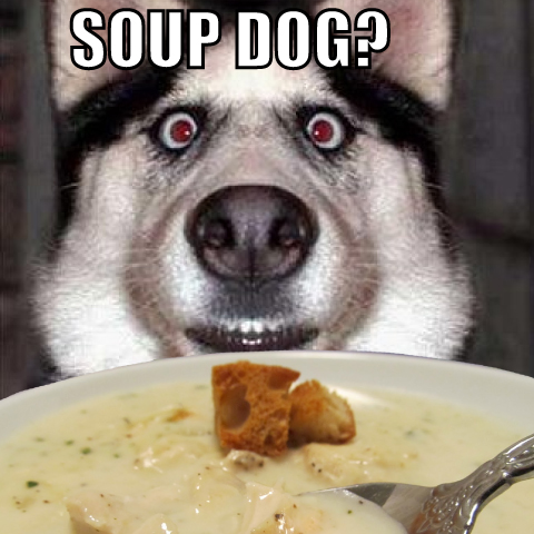 wyd_soup_dog_5