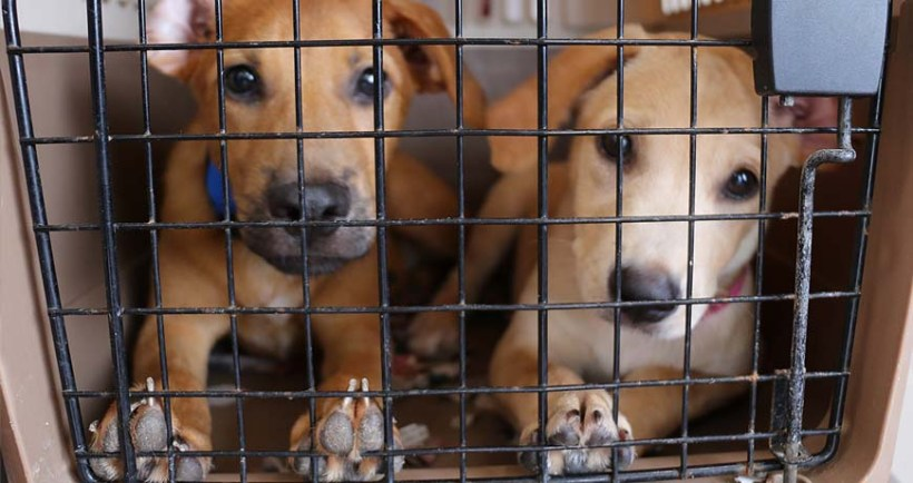 Thursday Clinic: free sterilization of dogs and cats