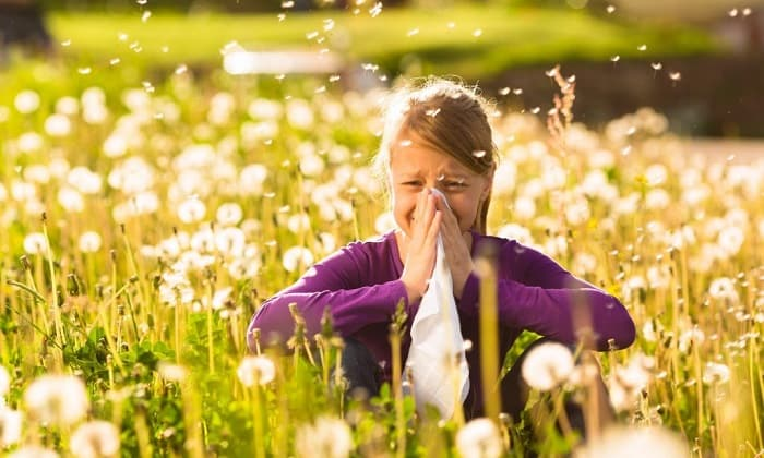 pollen allergy
