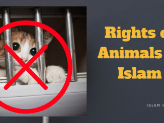 Rights of Animals in Islam