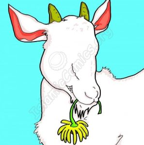 Snowy the Goat - A Poem about Eid ul Adha by Imaan Kazmi