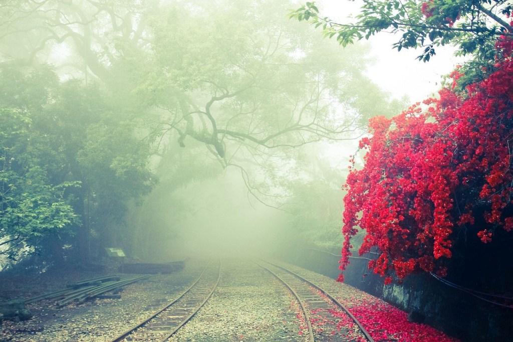 Photo: Taiwan's Mount Ali (Alishan) railway