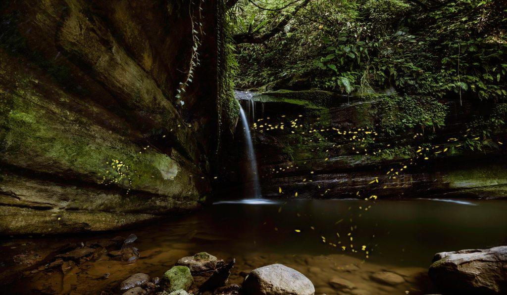 Photo: Fireflies by waterfall