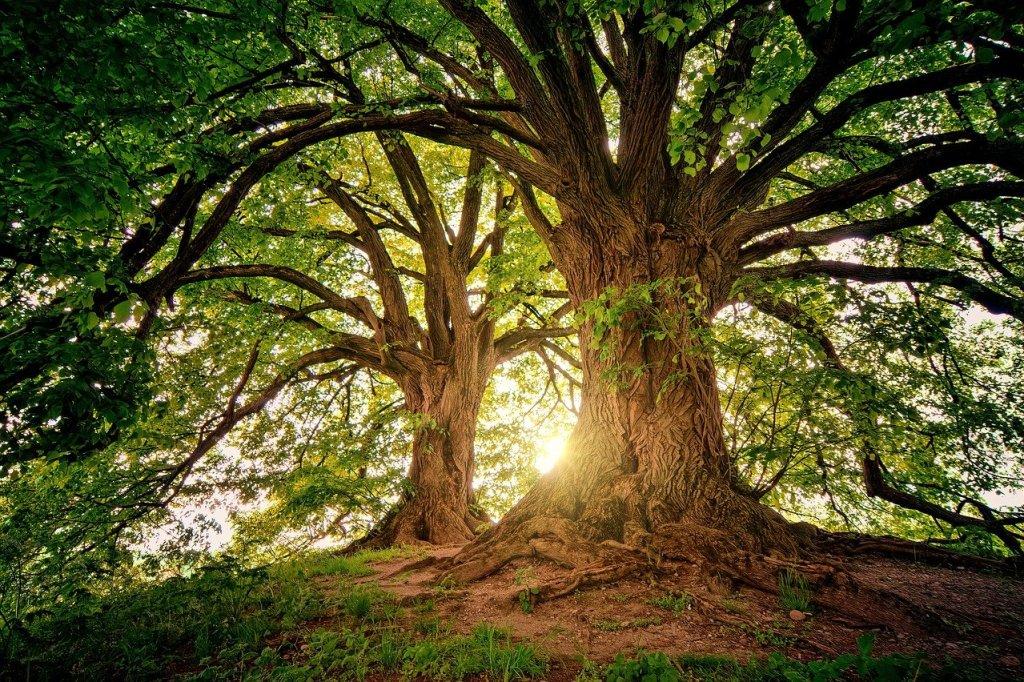 Photo: Two Trees