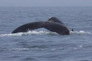 whales 52
