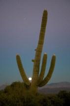 Phoenix 057