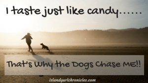 Like Candy Dog Chaser