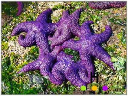 starfish on pender island