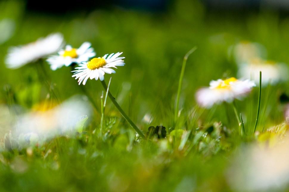 Spring by Yannick Bammert.