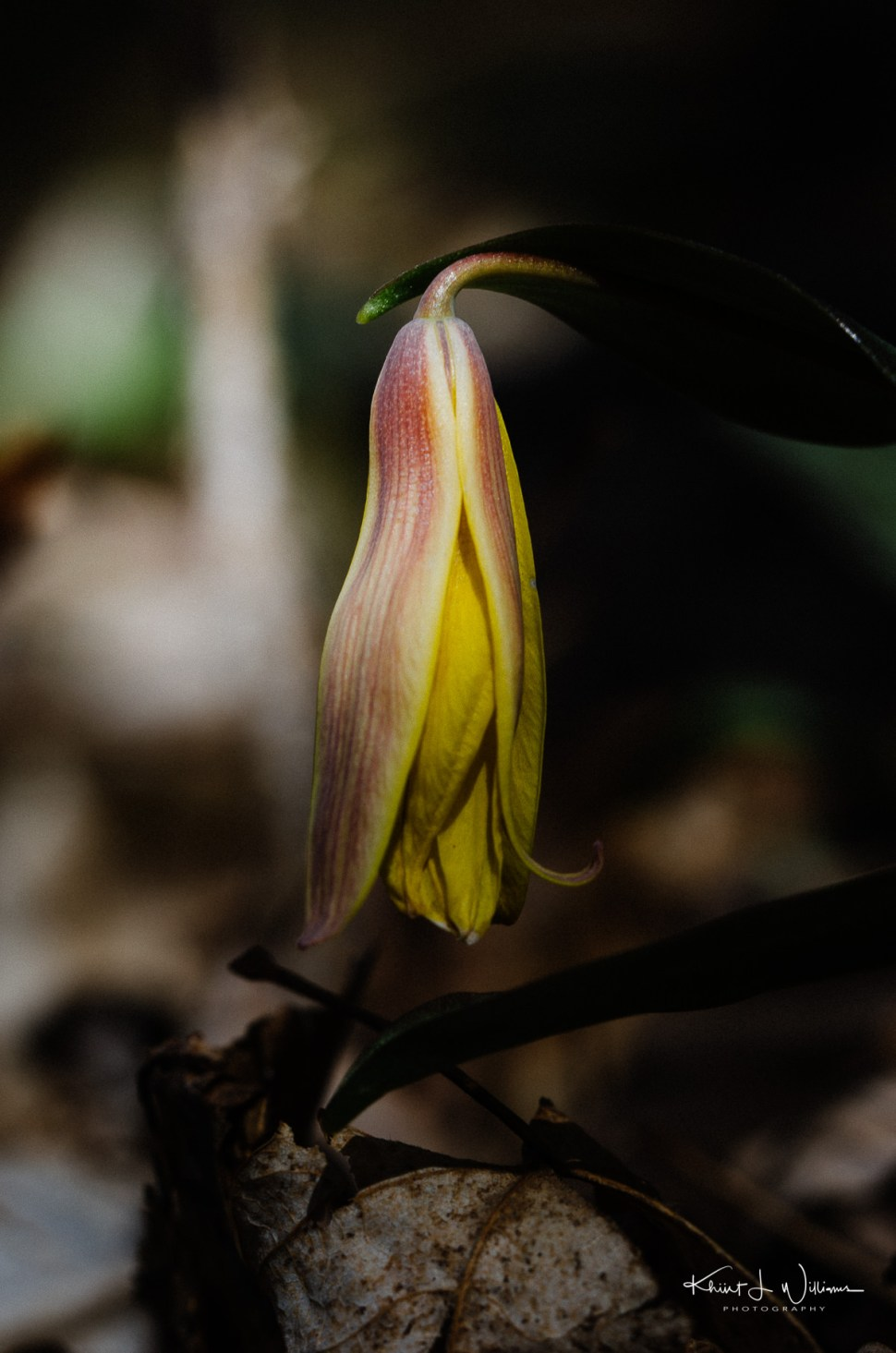flower, sourland mountain, spring