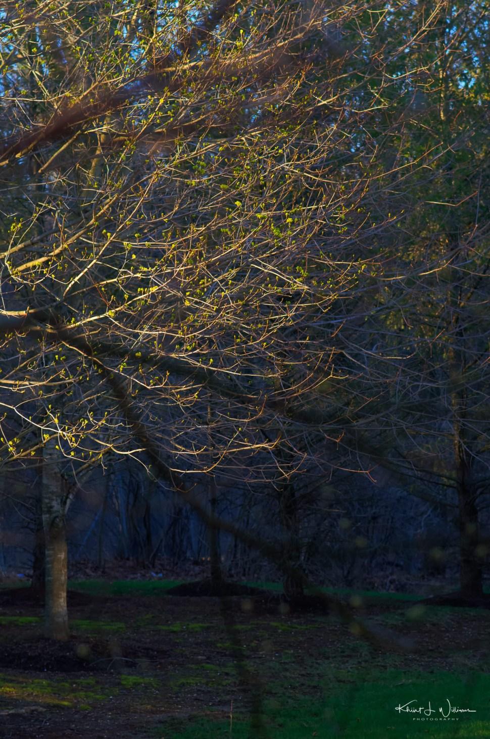 Morning, Tree, Leaves, Light