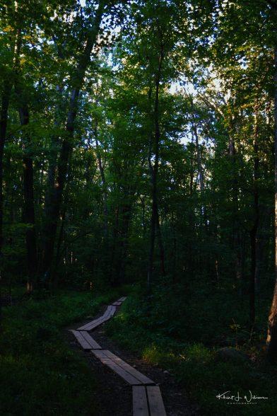 Woods %name