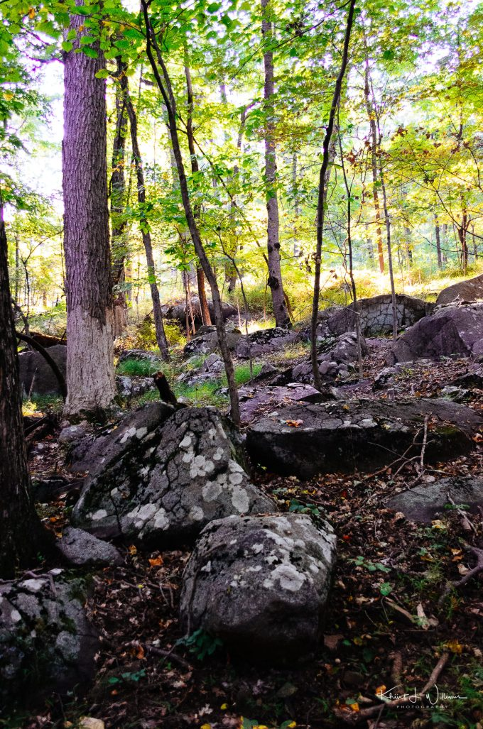Stones, Sourland Mountain Preserve