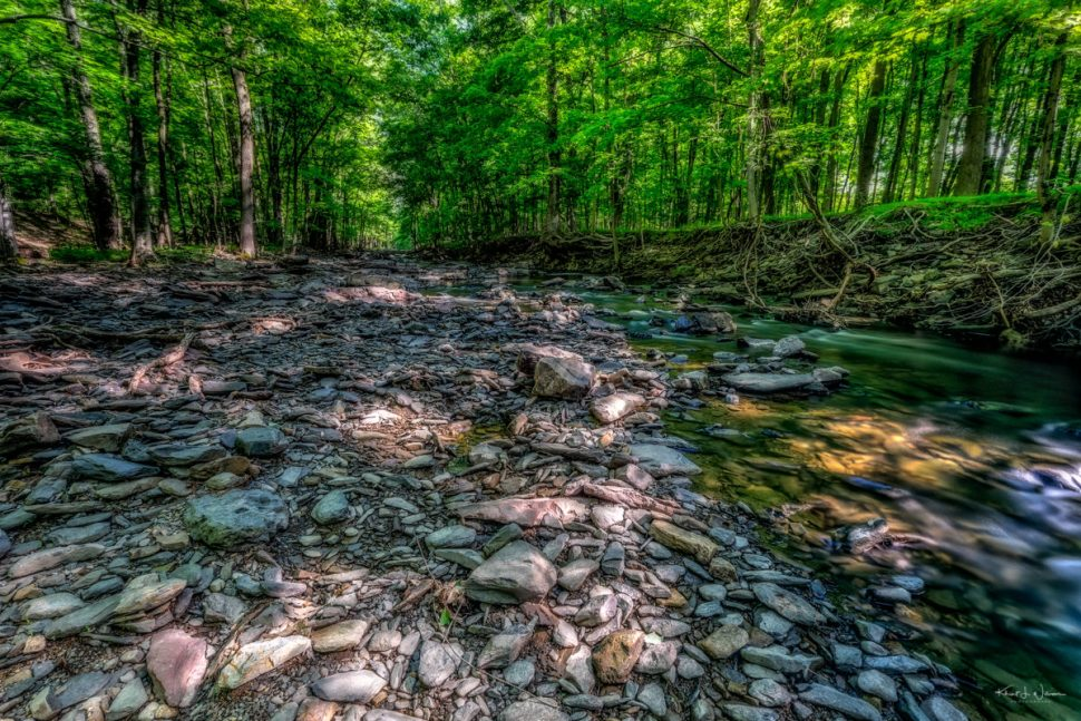 Rock Brook, Trees, Rocks, Forest