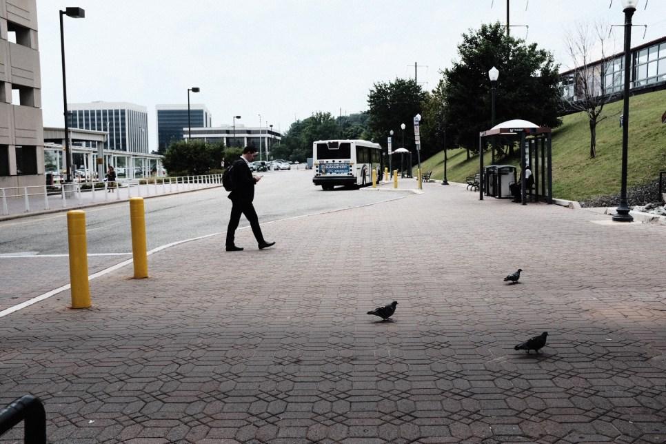 Pigeon playground