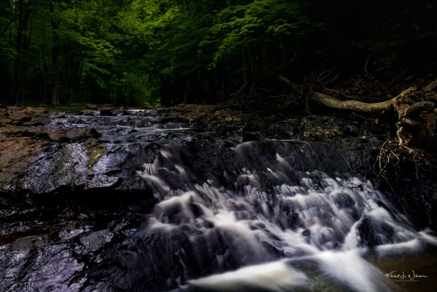 19 June 2015 – The Rock Brook, Skillman, New Jersey – Apple iPhone 6 + iPhone 6 back camera 4.15mm f/2.2 @ f/2.2, ISO 40