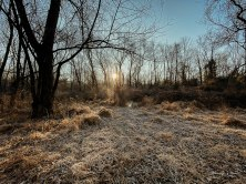 St. Michael's Farm Preserve Beden Brook Trail | iPhone 365 Day 79 | 22 December 2019 | Apple iPhone 11 Pro | iPhone 11 Pro back camera 1.54mm f/2.4 | ISO 20 | 📷
