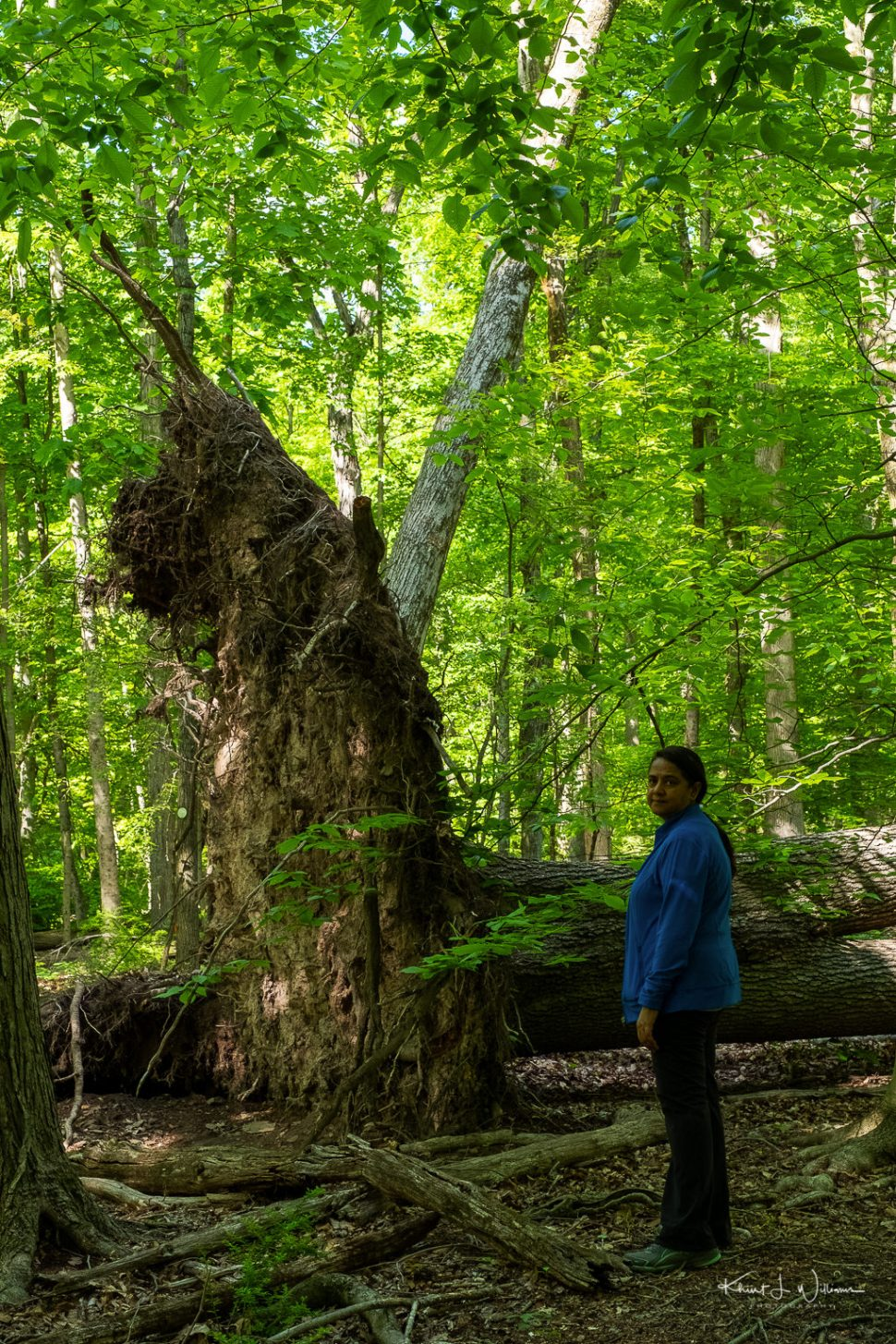 Bhavna standing next to a fallen tree stump