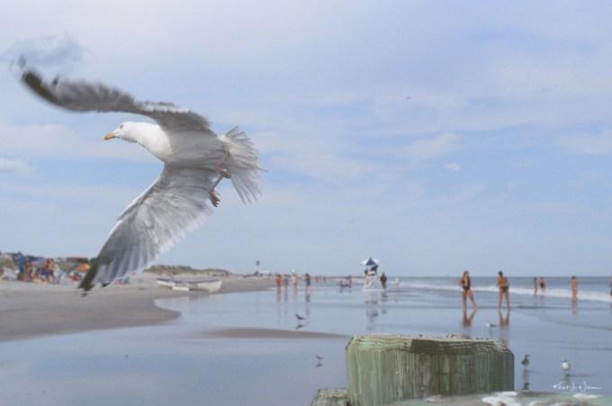 Seagul flying on Avalon Beach