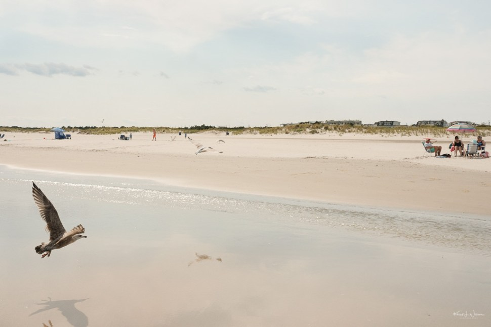 Seagull Beach Scene