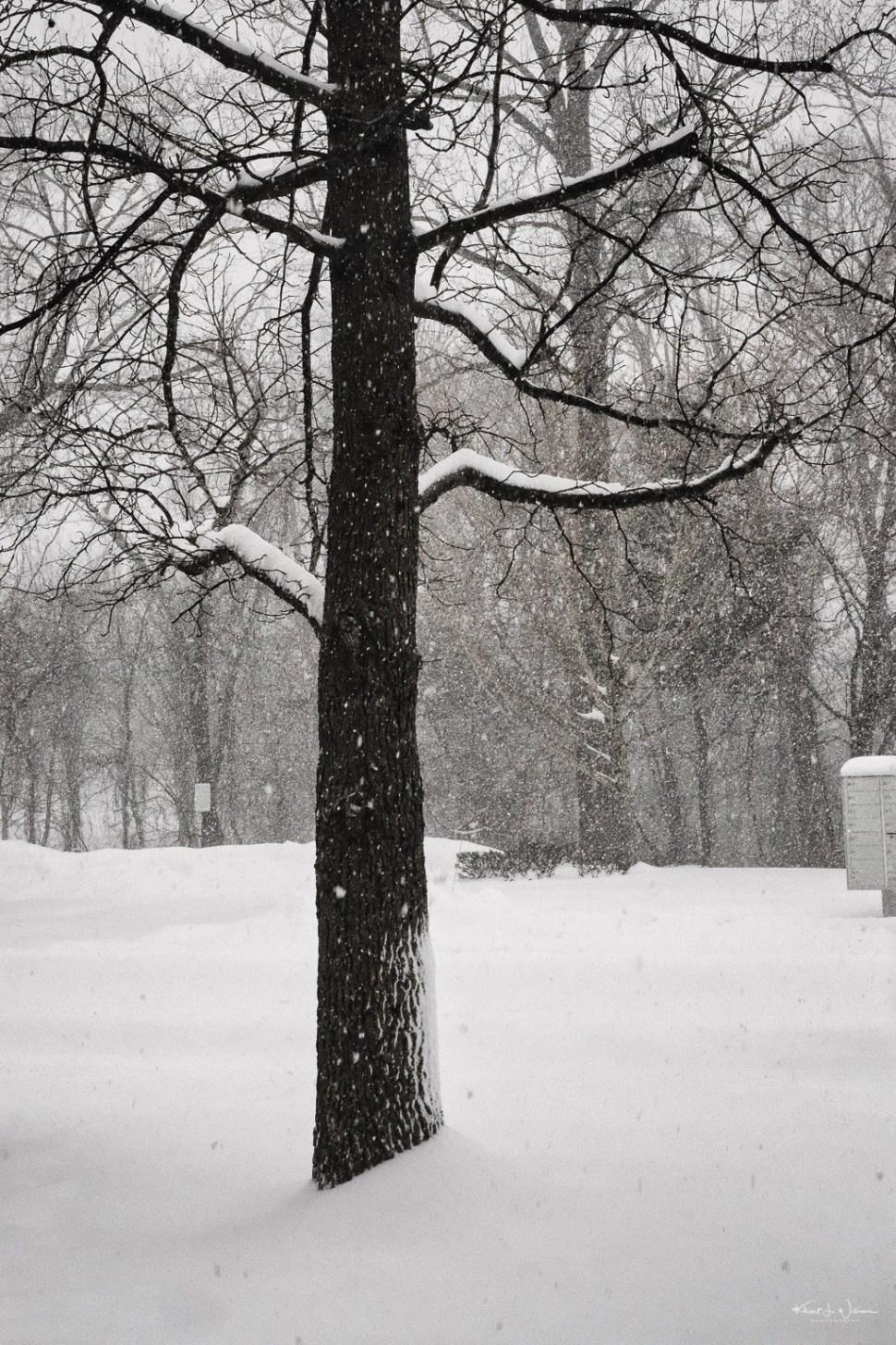 outdoor winter scene