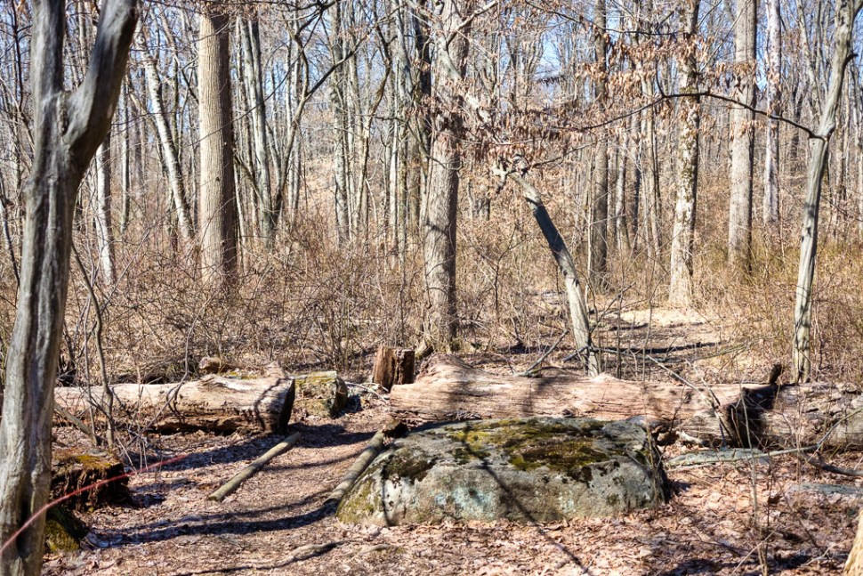 forest hiking trail with leafless trees