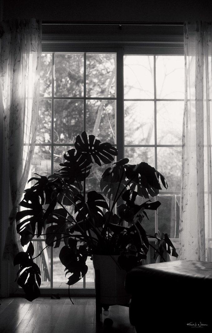 sliding door, plant, room