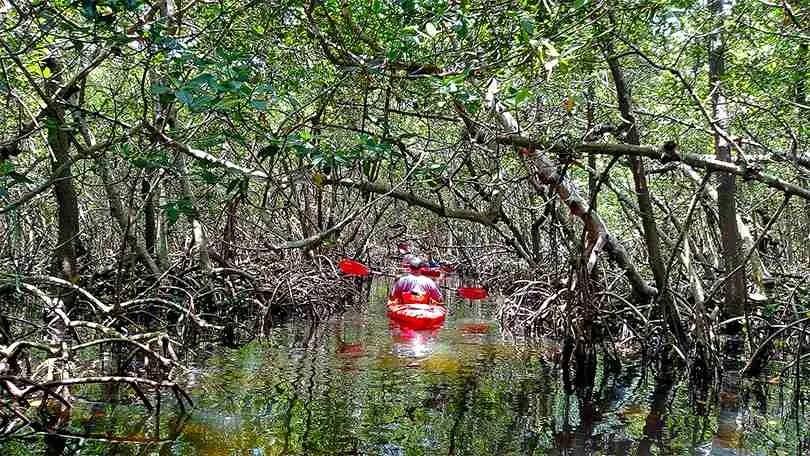 Island Kayak Tours kayak rentals Mangrove Tunnels