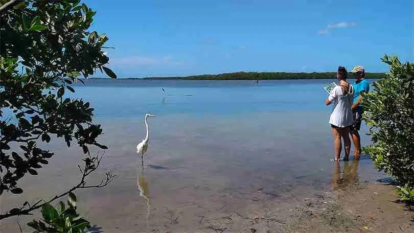 Island Kayak Tours Rental Adventures