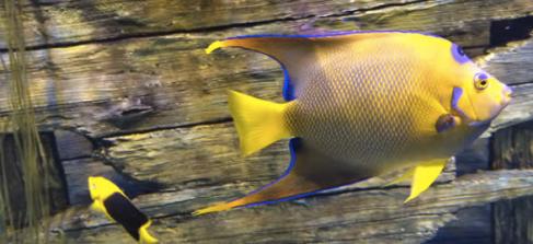 NC Aquariums Exotic Fish