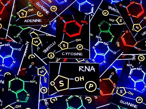 Peptide - RNA