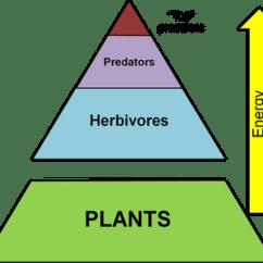 Deciduous Forest Food Web Diagram Da Lite Motorized Screen Wiring Trophic Levels - National Park