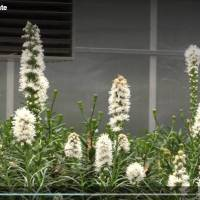 Construction Update: Aga Khan Garden Alberta