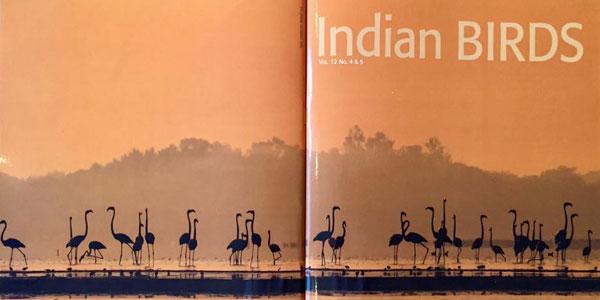 Indian Birds