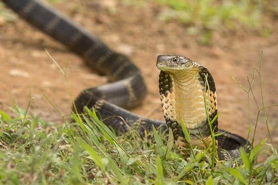 reptiles10