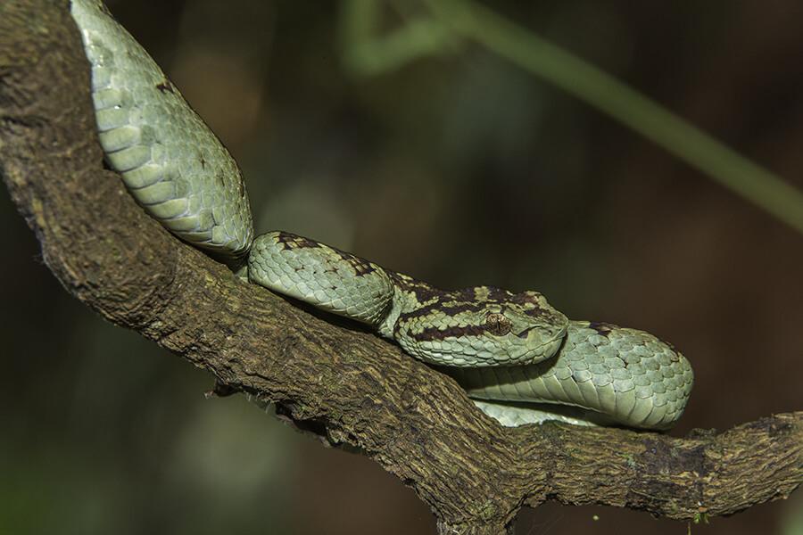 reptiles12