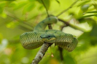 reptiles5